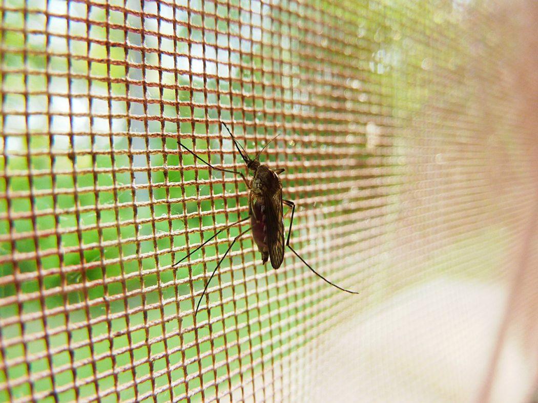 hmyz 1