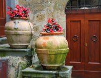 Historie pěstování květin v nádobách