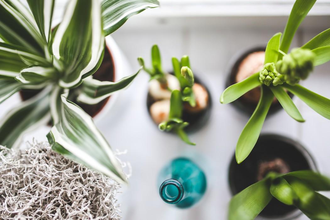 pokojové rostliny 2
