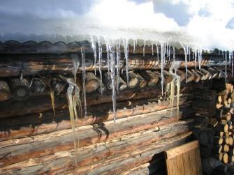Okapy v zimě