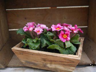 Stále zelené květinové nádoby
