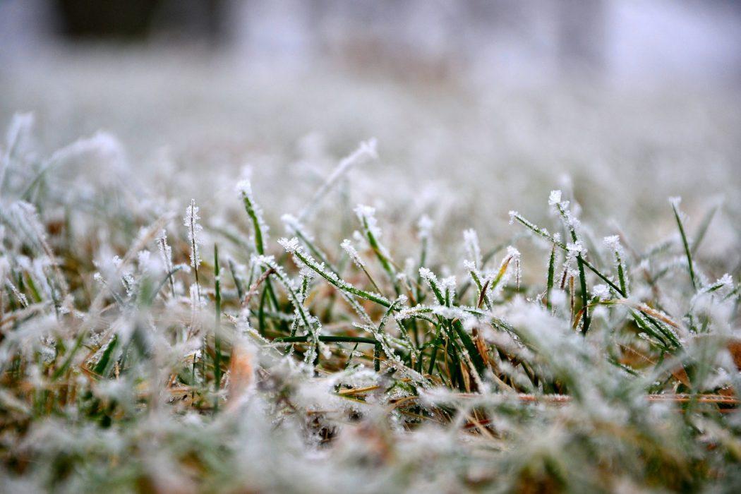 trávník po zimě
