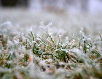 Jak pečovat o trávník po zimě?