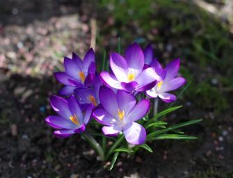 Jarní okrasná zahrada