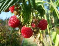 Zdravé produkty na biozahradě