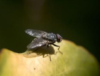 Jak bojovat v bytě s hmyzem
