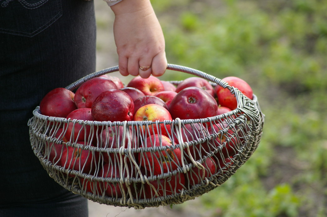 jablko-2