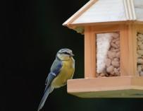 Proč pořizovat krmítka a budky pro ptáky?