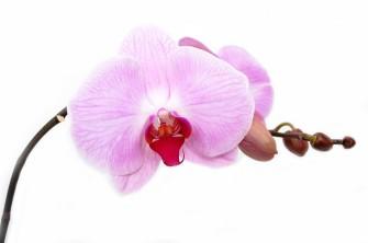 Exotické pokojové rostliny