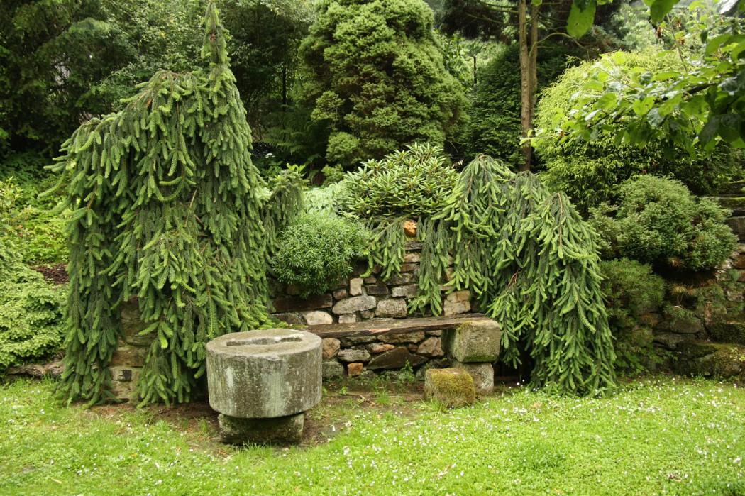 dřeviny v zahradě