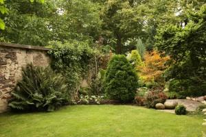 Jehličnany na zahradu