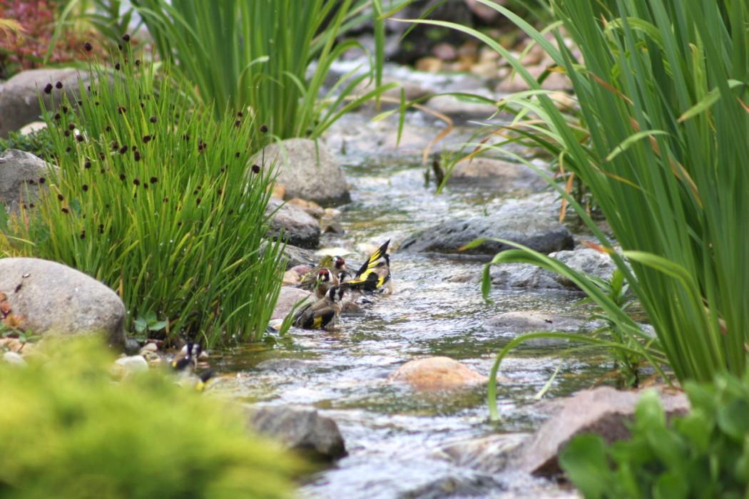 potok v zahradě