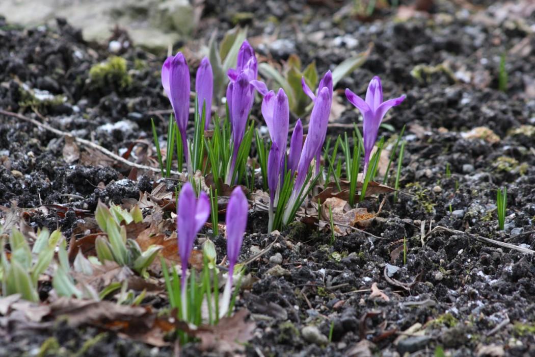 jaro v zahradě