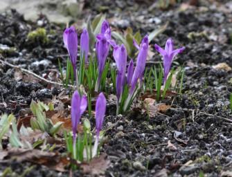 Jaro startuje