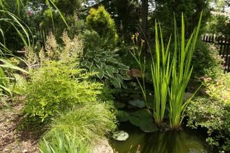 Čisté zahradní jezírko