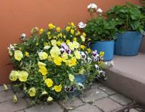 Zahrada s květináči