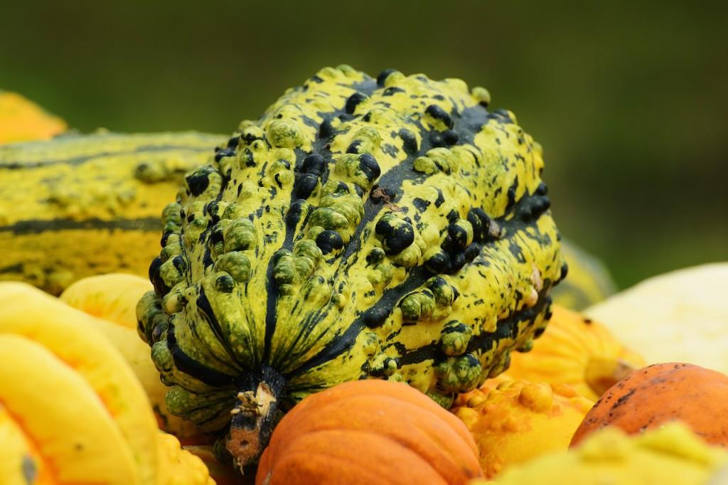 Okrasné dýně se sice konzumovat nedají, ale jsou velmi oblíbenou součástí podzimní výzdoby truhlíků, květináčů či různých zákoutí.