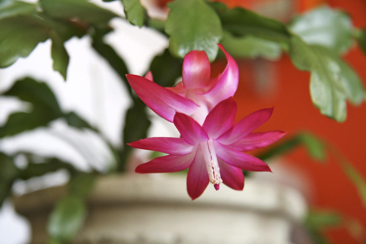 Pro tvorbu květů je důležité vybrat správné stanoviště.