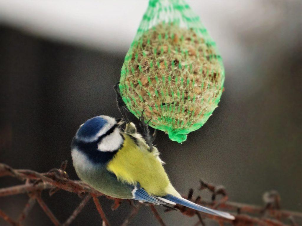 Vhodné krmivo pro ptactvo lze zakoupit v obchodech. Co však do krmítka nepatří jsou zbytky jídla.