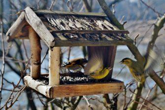 Krmítka a budky pro ptáky