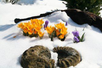 První jarní květiny od A do Z