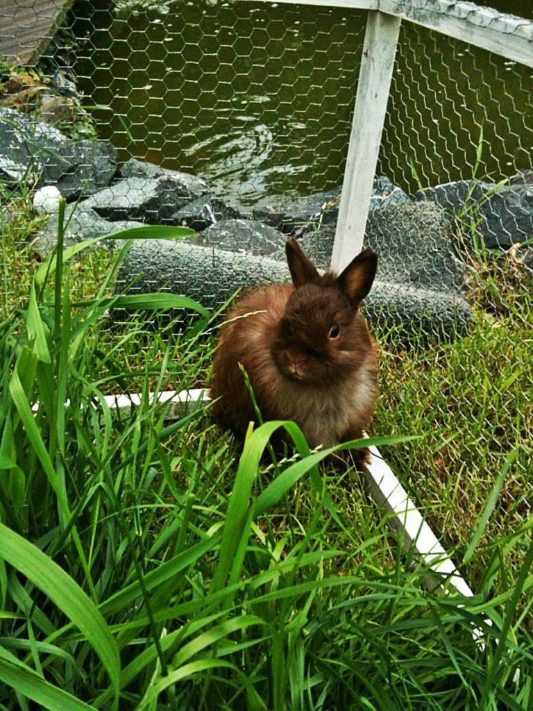 Pokud se králíčkovi nehodláte věnovat, pořiďte si raději křečka. Ten výraznou péči nepotřebuje, vystačí si sám.