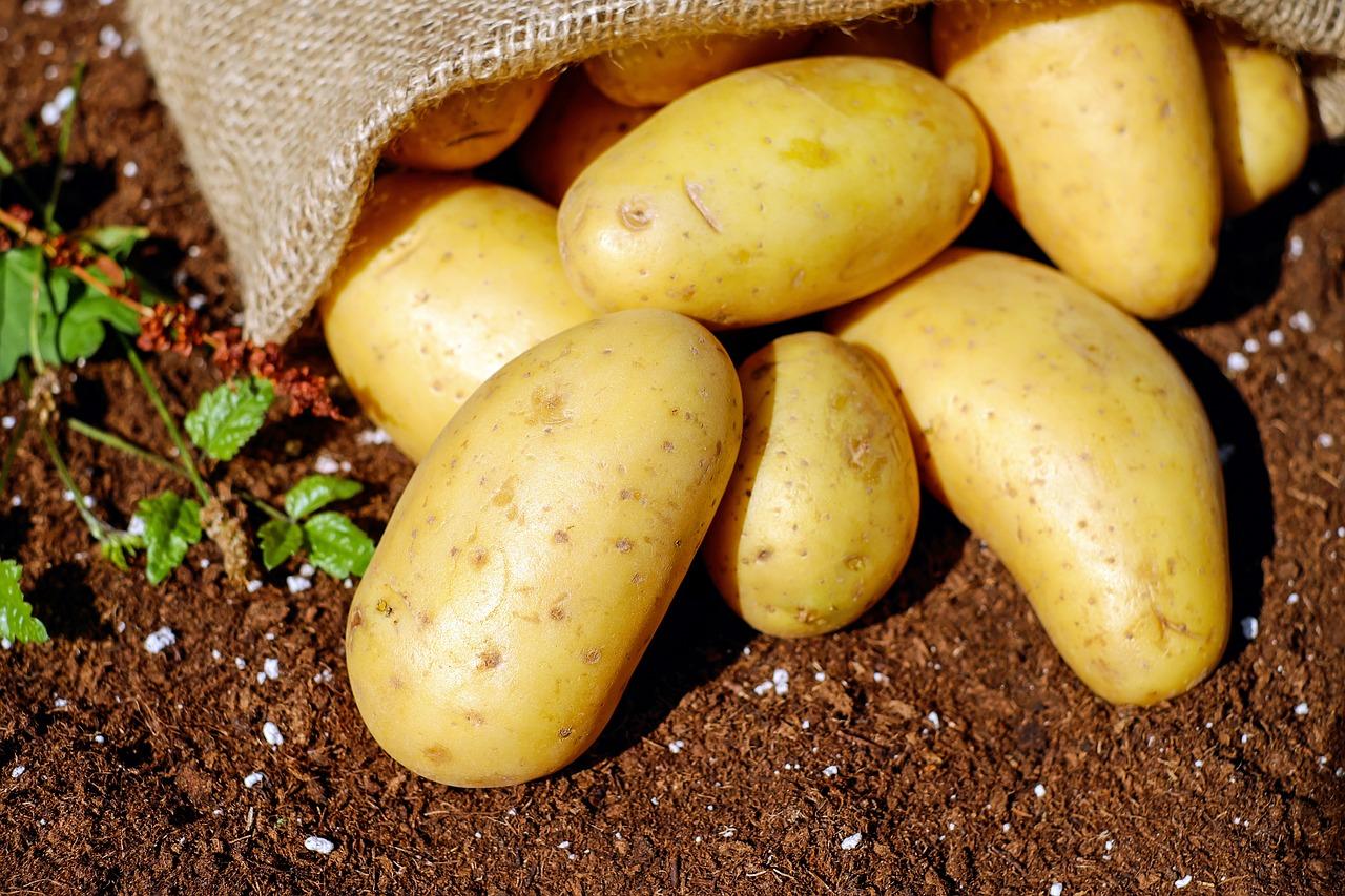 Domácí brambory jsou jednoduše pochoutkou, nesrovnatelnou s bramborami z obchodu. Pěstujte je proto, abyste si pochutnali - děláte to jen pro sebe!