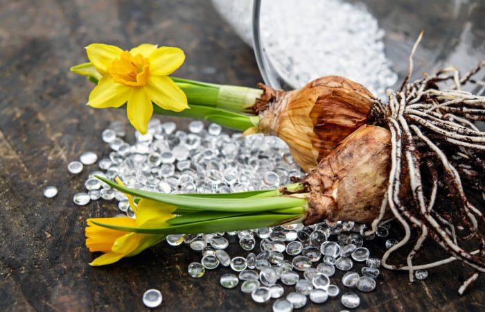 Krokusy, zvonky, hyacinty i narcisy v květináči za oknem