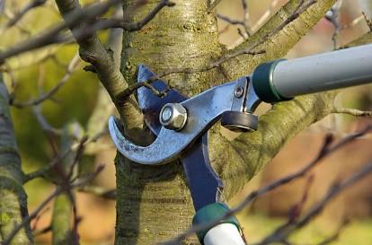Prořez stromů půjde snadněji s vhodným nářadím.