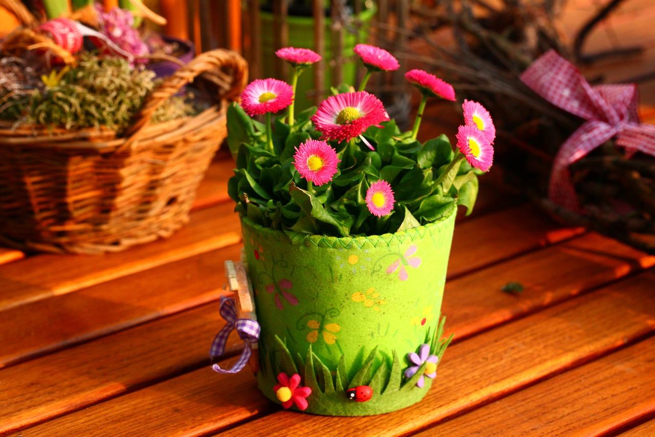 Jarní nebo Velikonoční dekorace v květináči plném sedmikrásek.