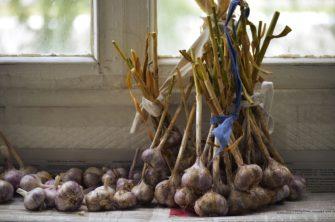 Jak skladovat česnek