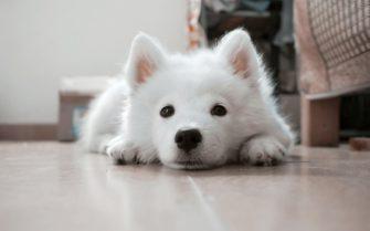Podlahové chlazení – topení