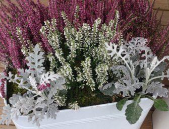 Podzimní výzdoba truhlíků a květináčů