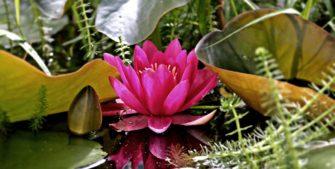 Zahradní jezírko svépomocí