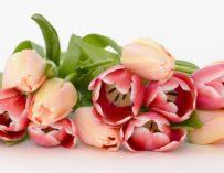 Co dělat, aby tulipány ve váze hned neuvadly?