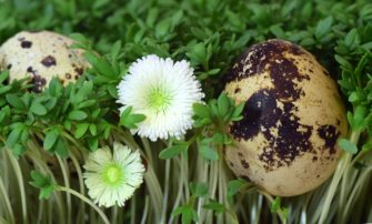 Poznejte velikonoční tradice – zelený čtvrtek