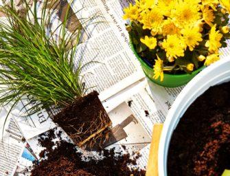 Jarní zahradničení na balkóně
