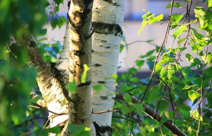 Alergie na pyly a práce na zahradě