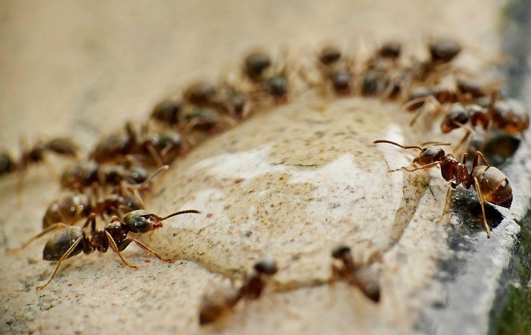 Hubeni-hmyzu