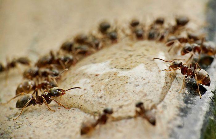 Jak se zbavit hmyzu v domácnosti a kolik to stojí?